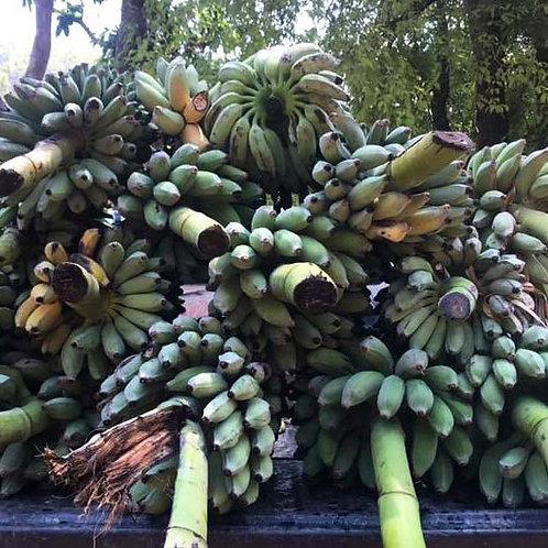 Pickup Truck of Bananas