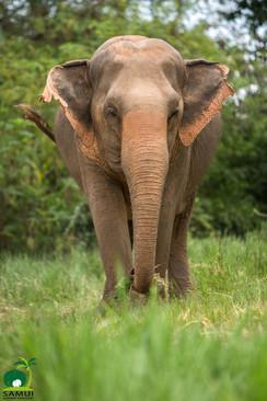 Samui_Elephant_Sanctuary_40.jpg
