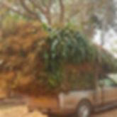 Pickup_Truck_Cornstalks_4.jpg
