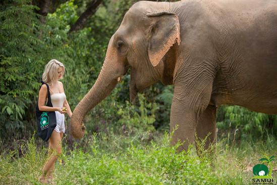 Samui_Elephant_Sanctuary_36.jpg