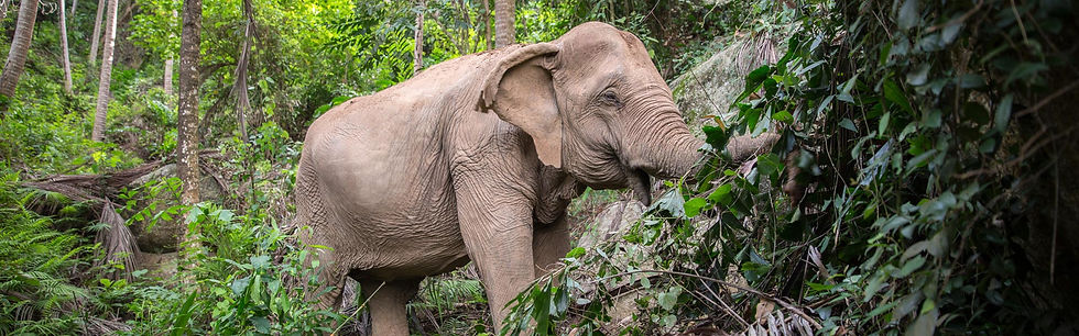 Samui-Elephant-Sanctuary_B34.jpg