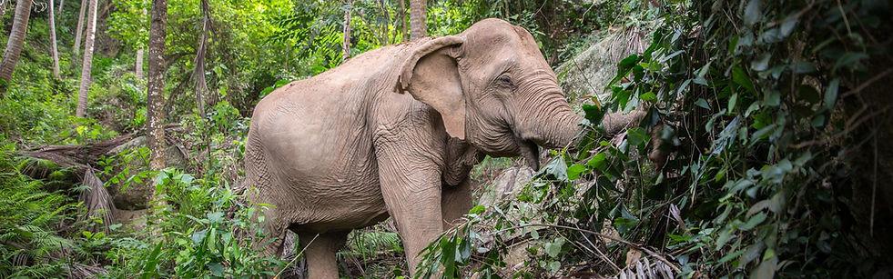 Samui-Elephant-Sanctuary_B34.jpg