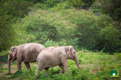 Samui_Elephant_Sanctuary_60.jpg