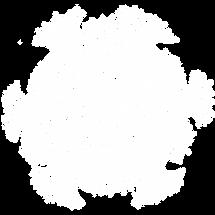Haeckel_1_wit.png