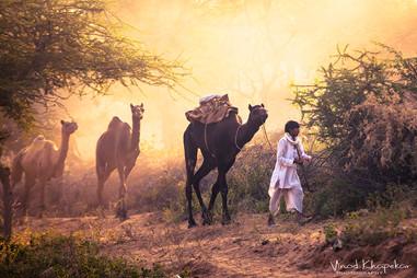Pushkar The Camel Fair_21.jpg