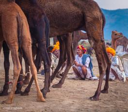 Pushkar The Camel Fair_36.jpg