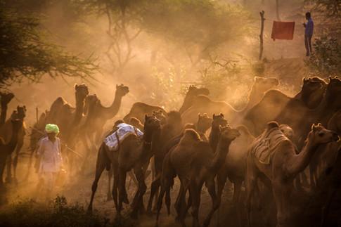 The Pushkar Camel Fair.