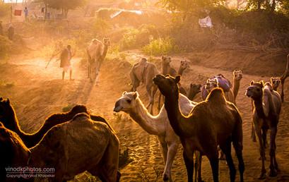 Pushkar The Camel Fair_06.jpg