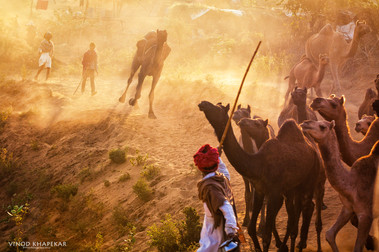 Pushkar The Camel Fair_12.jpg