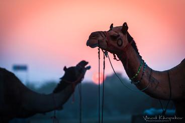 Pushkar The Camel Fair_23.jpg