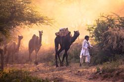 Pushkar13-578