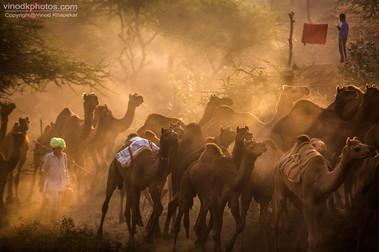 Pushkar The Camel Fair_01.jpg