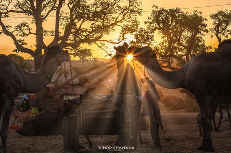 Pushkar The Camel Fair_25.jpg
