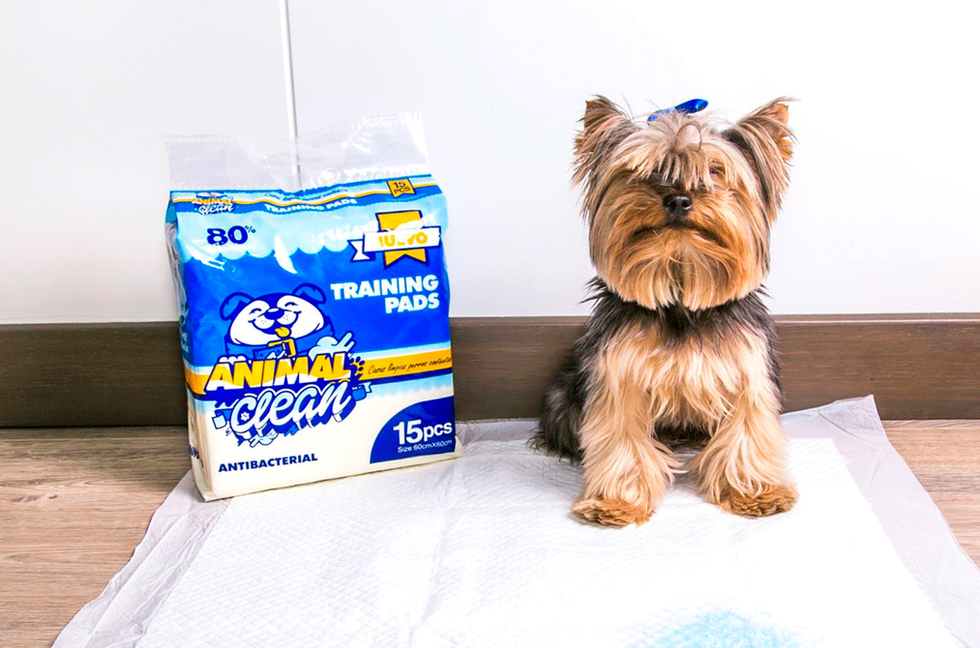 Animal Clean