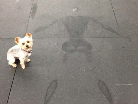 Sweat Angels Are Forming