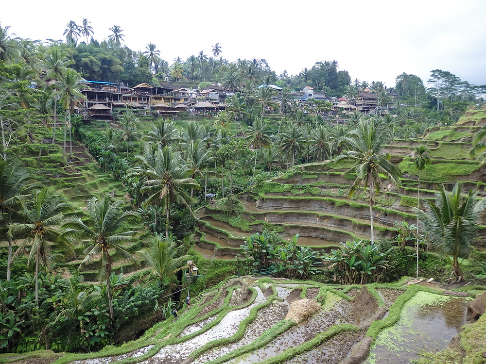 Rice terraces on our holiday in Bali