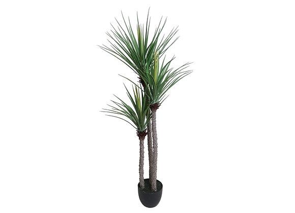 """59"""" Yucca Plant"""
