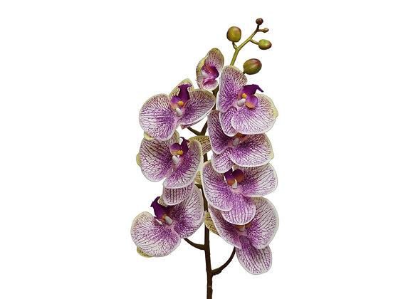 "39"" Phalaenopsis with 8 Flowers"
