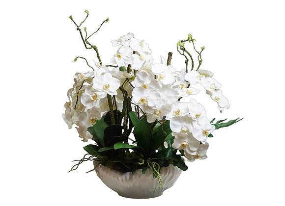 White Orchid Arrangement in White Pot