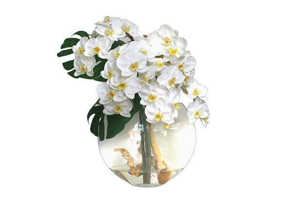 White Orchid with Split Philo Leaf in Glass Moon Vase