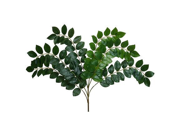 """26"""" Bean Leaf Bush"""