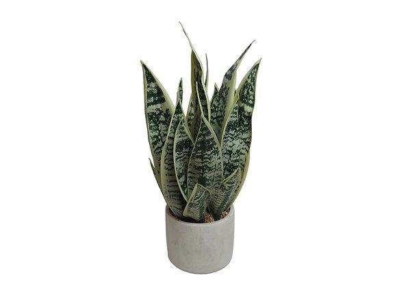 "21"" Potted Sansevieria Plant"