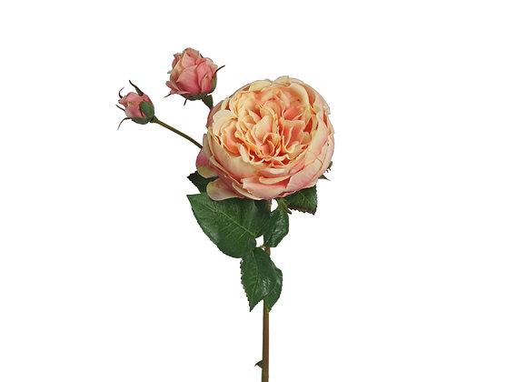 "21"" Cabbage Rose"