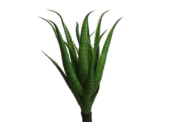 """14"""" Aloe"""