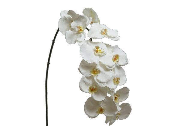 "44"" Phalaenopsis Large with 12 Flowers"