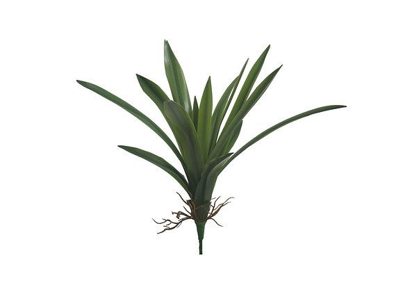 Cymbidium Leaves