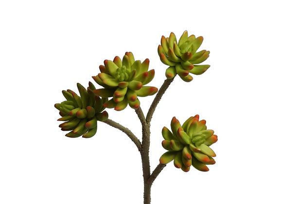 "15"" Jade Plant"