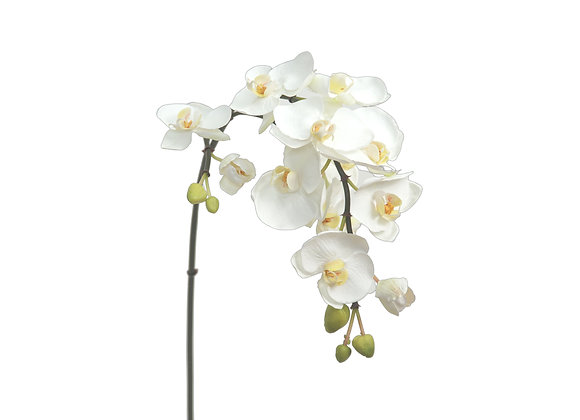 """36"""" Phalaenopsis with 13 Flowers & 7 Buds on 3 Branches"""