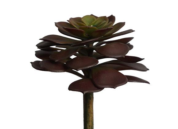 """9.5"""" Aeonium Succulent"""