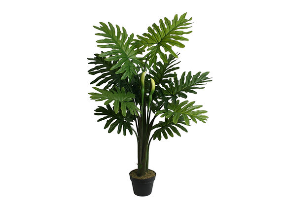 """45"""" Philo Selloum Plant with 11 Leaves"""