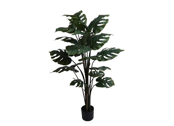 "48"" Split Philo Plant with 18 Leaves"