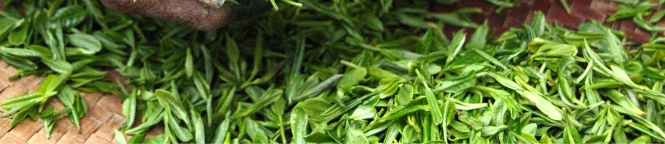 Bannière thé vert .png