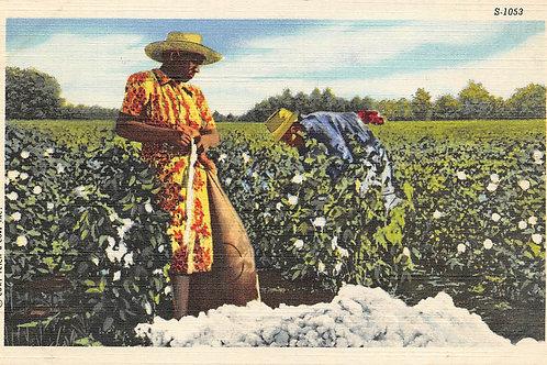 Orange & yellow dress woman picking cotton 1953