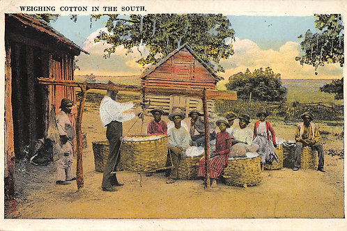 Weighing cotton in the south