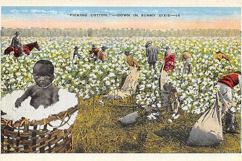 Picking cotton, card 14