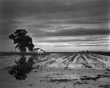 Rice field at sunset in Amposta Cataluni