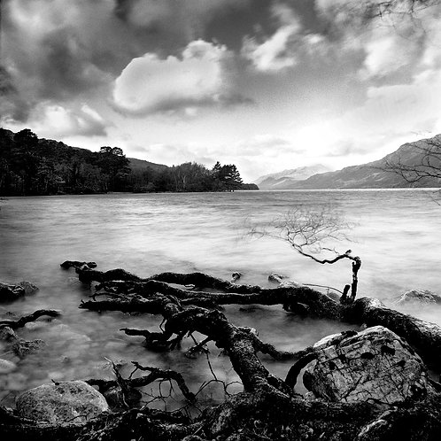 Black and white print of Roots going into Loch Maree. Scotland.
