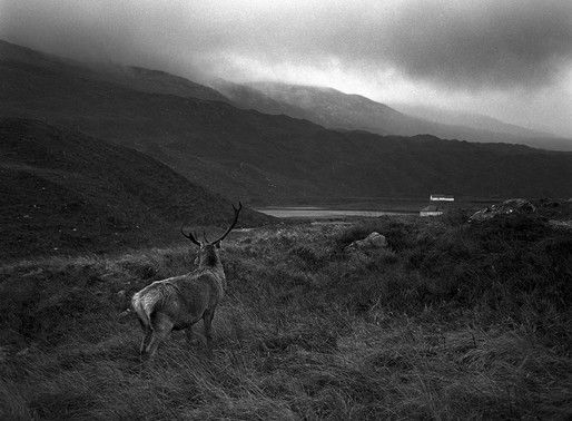 Photographing a stag in Scotland