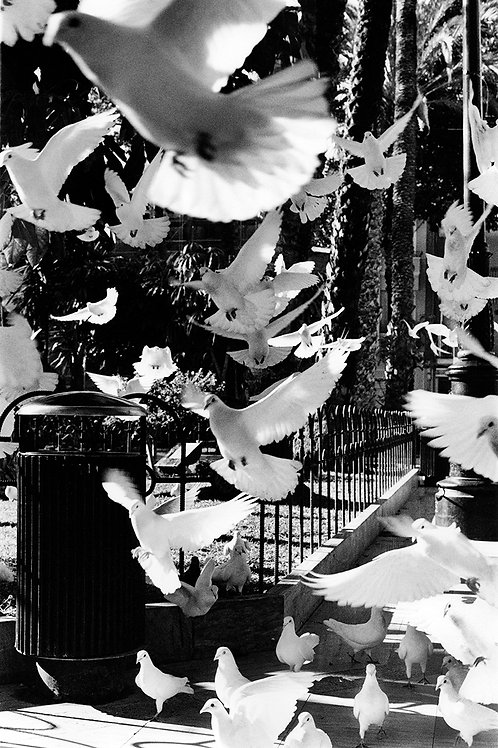 Black and white print of the doves of peace.