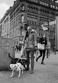 Dogs-Manchester.jpg