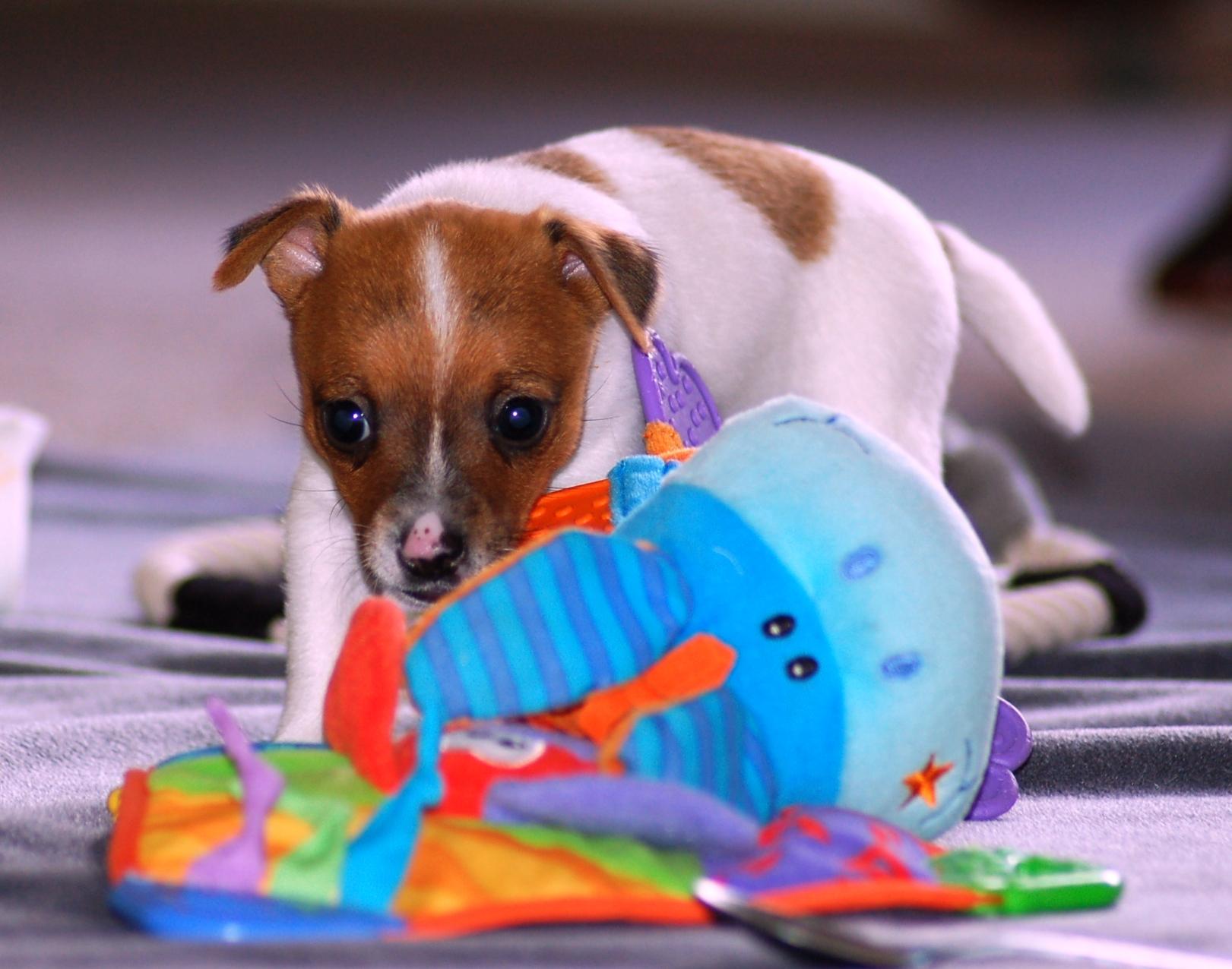 Puppies 6.1.08 006