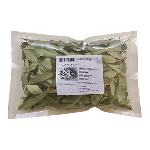 Eucalyptus, Dried Leaves