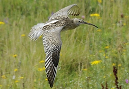 Curlew national Park