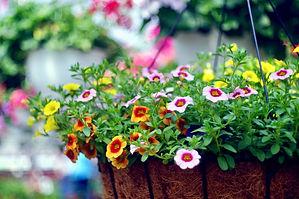best-hanging-plants-2-1586536688.jpg