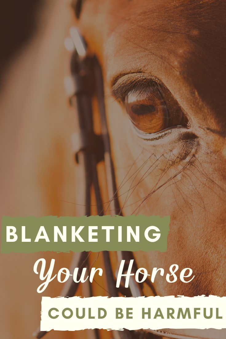 Blanketing Your Horse Could Be Harmful