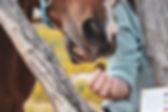saddle and sage.jpg